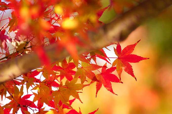 夏から秋にかけて増えやすい脱毛量